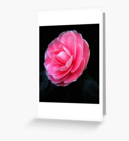 Softness of a pink camelia Greeting Card