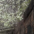 Spring Colors, Harsimus Branch Embankment, Jersey City, New Jersey by lenspiro