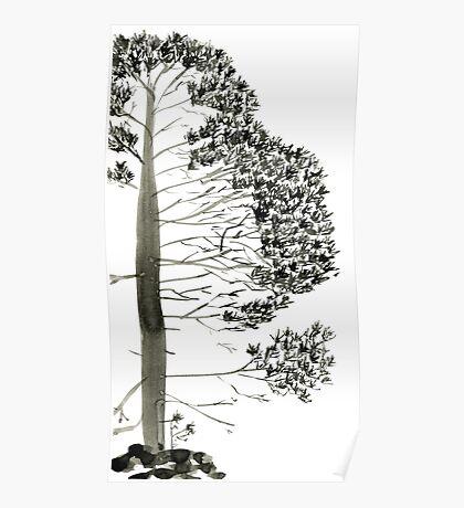 Single Pine, a symbol of longevity Poster