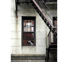 Ghost Dog Photographic Print