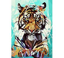 iT Tiger  Photographic Print