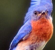 Bird Lover - bluebird phone case Sticker