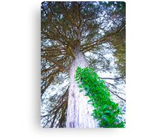 Looking up to a Tree out during a Nature walk Canvas Print