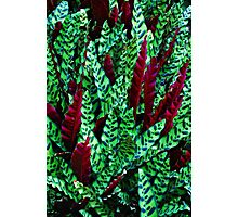Green & Red Leaves Photographic Print