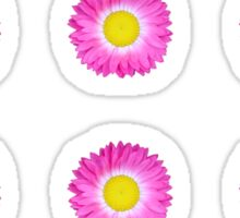 Pink and Yellow Daisy Sticker