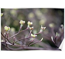 Dogwood Puppies Poster