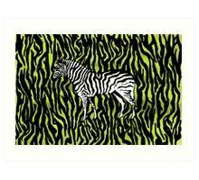 Zebra - animal colour pop art Art Print
