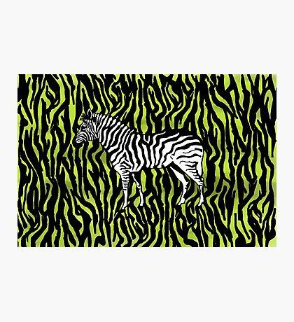 Zebra - animal colour pop art Photographic Print
