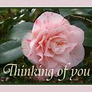 Pink striped Camellia, Thinking of you. by Mary Taylor