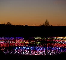 Field of Light by Richard Murias