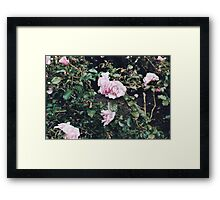Blooms No.2 (San Francisco) Framed Print