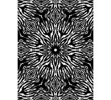 Black White Zebra Abstract Pattern  Photographic Print