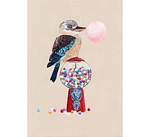 Bird gumball machine Kookaburra Photographic Print