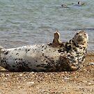 Grey Seal waving by LisaRoberts