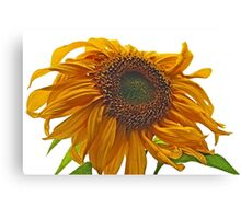 sunflower bad hair day Canvas Print