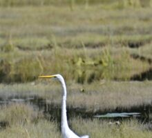 Great Egret Sticker