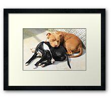 Sleeping Dogs Framed Print