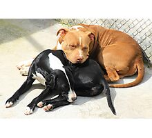 Sleeping Dogs Photographic Print