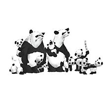 Panda Family Photographic Print