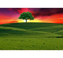 One Tree Hill Photographic Print