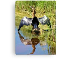 Drying Her Wings Canvas Print