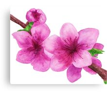 Pink flowers of peach Canvas Print