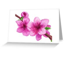 Pink flowers of peach Greeting Card