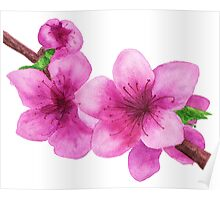 Pink flowers of peach Poster