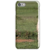 Lookout - Cheetahs, Africa iPhone Case/Skin