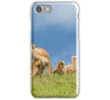 Playful Lions - Africa iPhone Case/Skin