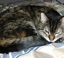 RIP Zoe the Wondercat by warriorprincess