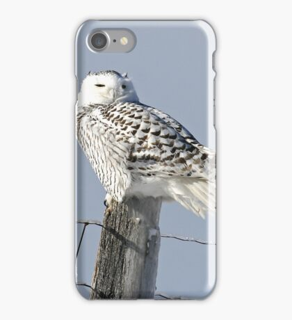 Snowy Owl on Fencepost iPhone Case/Skin