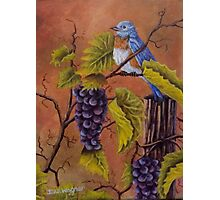 Bluey and the Grape Vine Photographic Print