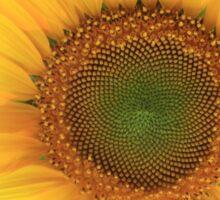 Sunflower with sunburst shining through at sunset Sticker