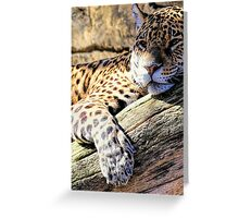 Jaguar resting in the shadow Greeting Card