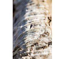 Drift wood Photographic Print