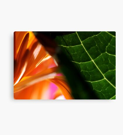 Macro Photo Colorful Flower Green and Orange Canvas Print