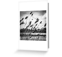 A Brush in the Wind Greeting Card