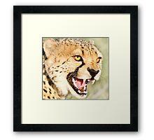 Nice Kitty...Namibia Africa Framed Print