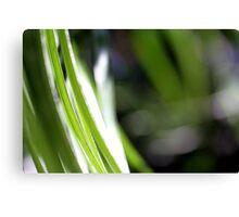 Macro Photo Green Grass Canvas Print