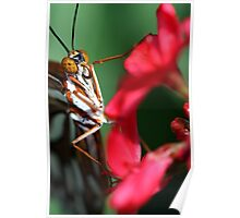 Macro Photo Passion Butterfly Poster