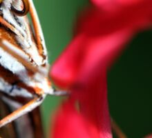 Macro Photo Passion Butterfly