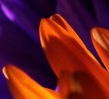 Macro Photo of Colorful Flowers