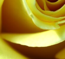 Macro Photo Yellow Rose