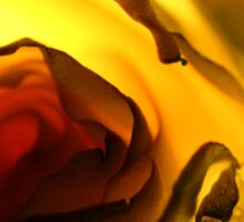Macro Photo Yellow Flower