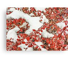 Leaves in the Snow Canvas Print