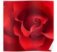 Red Rose Flower Blossom Roses Flowers Background Poster