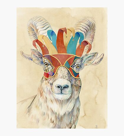 Bighorn Sheep Photographic Print