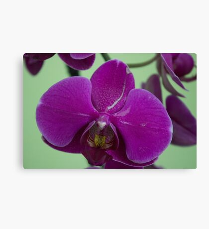 Orchid Macro Canvas Print