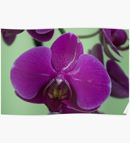 Orchid Macro Poster